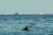 В Красном море с перевернувшейся лодки спасли российских туристов
