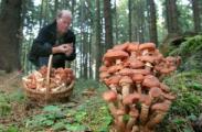 Идеологи  Полоцкого района организовали грибной чемпионат