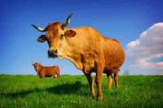 Сельхозпроизводство Беларуси должно развиваться на принципах самоокупаемости и самофинансирования - Мясникович
