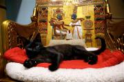 Британские ученые выявили 25 признаков страданий кошек