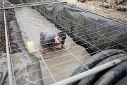 Во Франции отравились 30 участников забегов в грязи
