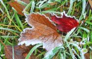 В Беларусь приходят ночные заморозки