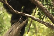 Шимпанзе с дротиками указали ученым на пол первых охотников