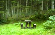 Запрет на посещение лесов в Беларуси отменяют