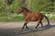 Россияне покупают породистых лошадей в Глубокском районе