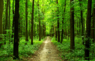 В Беларуси почти по всей стране запретили посещение лесов