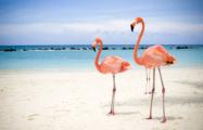 Экс-директор Минского зоопарка вместе с женой приторговывал фламинго