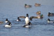 В Беларуси могут запретить весеннюю охоту на птиц