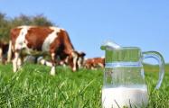Русый согласился с претензиями Россельхознадзора по молочке