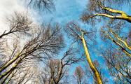 Синоптики предупредили о резком потеплении в Беларуси