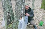 Рекордно ранним будет сбор березового сока в Беларуси в этом году