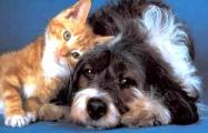 «Недавно собака покусала какого-то чиновника»