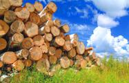 Семашко о деревообработке: Надо только не развазюкивать