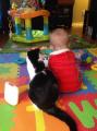 17 котов, из которых получились прекрасные няни