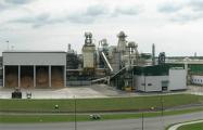 «Беллесбумпром» лоббирует продление лицензирования экспорта ценных пород древесины