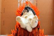 Эксперты раскрыли связь между вирусом Bad Rabbit и «Игрой престолов»