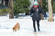 В Японии из-за снегопадов погибли семь человек