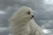 В Беларуси на 16 апреля объявлен оранжевый уровень опасности из-за ветра