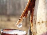 Лесхозы Беларуси планируют в 2012 году заготовить не менее 60 т товарного меда