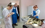 Убитая слонимская «чупакабра» оказалась собакой из соседнего двора