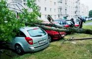 Непогода в Беларуси: ветер валит деревья и срывает крыши