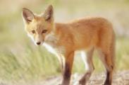 В Беларуси «опылили» диких животных