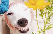 В Таиланде нашлась собака, которая всегда улыбается
