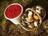 В Гродненской области намерены наладить переработку и расфасовку кофе