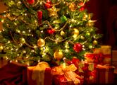 Новогоднюю елку в Беловежской пуще «съели» короеды-типографы