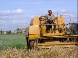В Беларуси к 15 августа завершат уборку зерновых пять из шести областей