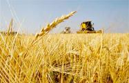 Показуха в сельском хозяйстве