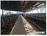 Правительство Беларуси намерено объявить тендер на поставки оборудования для молочно-товарных ферм