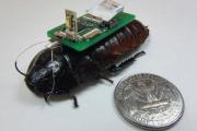 Тараканов-киборгов научили искать людей под завалами