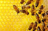 В Бресте в разгар зимы проснулись пчелы