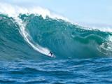Австралийский серфер погиб после нападения акулы