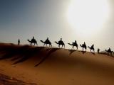 Исламисты предложили 10 верблюдов за голову Обамы