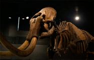 Ученые нашли 300-тысячелетнего слона
