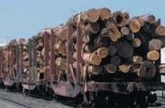 Беларусь введет запрет на экспорт своей древесины