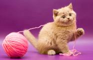 Ученые выяснили, что большая часть кошек - левши