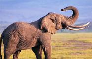 В российском цирке на представлении подрались слоны