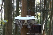 Японцы создали робота-лесоруба