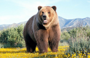 Видеофакт: В РФ медведь напал на артиста цирка во время представления