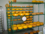 Новая линия по производству твердых сыров введена в строй на Осиповичском молочном комбинате