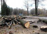 Защитнице парка 40-летия Октября угрожает милиция и КГБ