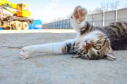 Строители Крымского моста приютили у себя шесть кошек и лисицу