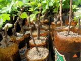 В Витебской области за время массового сбора грибов и ягод официально искали заблудившихся 25 раз