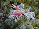 В ночь на 9 октября местами на почве ожидаются заморозки до минус 3 градусов