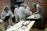 Польские археологи обнаружили секс-игрушку XVIII века