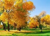 Настоящая осень придет на следующей неделе