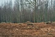 В Городокском районе запахали поднятый лен (Фото)